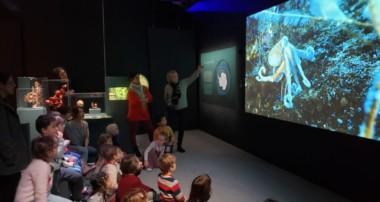 «La Minute de Véronique»-«Océan, Une Plongée Insolite» au Muséum national d'Histoire Naturelle avec les GS et les MS- 16 décembre 2019